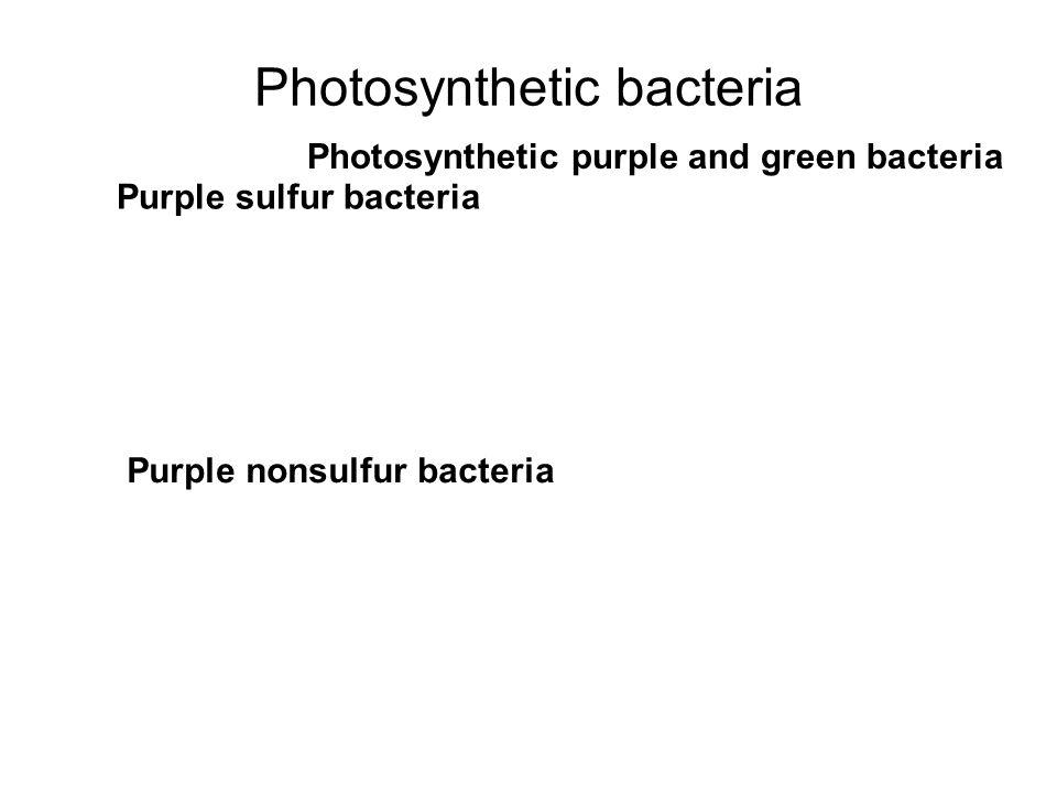 Photosynthetic bacteria Purple sulfur bacteria Purple nonsulfur bacteria Photosynthetic purple and green bacteria