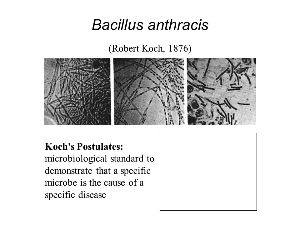 Bacillus anthracis (Robert Koch, 1876) Koch s Postulates: microbiological standard to demonstrate that a specific microbe is the cause of a specific disease