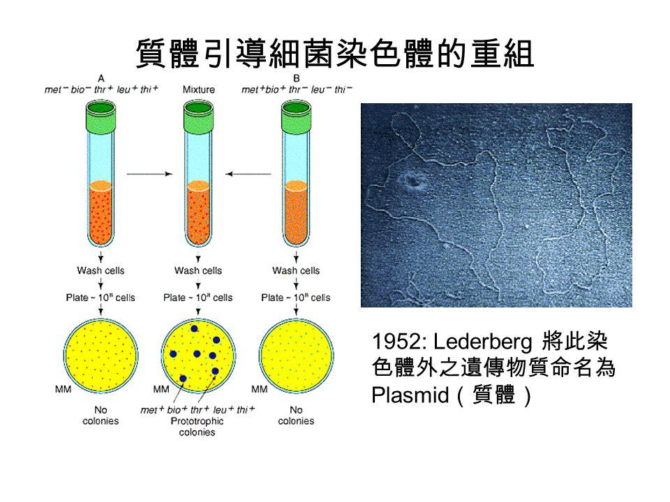 1952: Lederberg 將此染 色體外之遺傳物質命名為 Plasmid (質體) 質體引導細菌染色體的重組