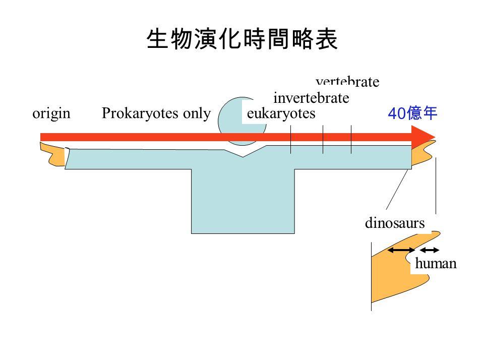 origin vertebrate eukaryotes invertebrate dinosaurs human Prokaryotes only 40 億年 生物演化時間略表
