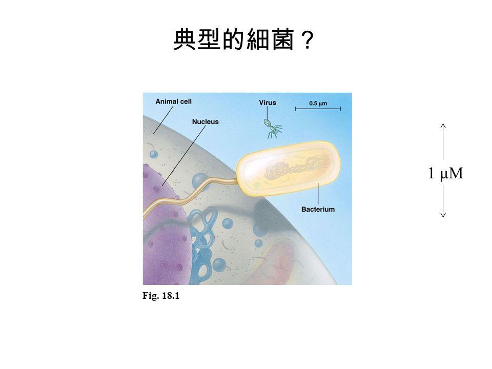 典型的細菌? 1 µM Fig. 18.1