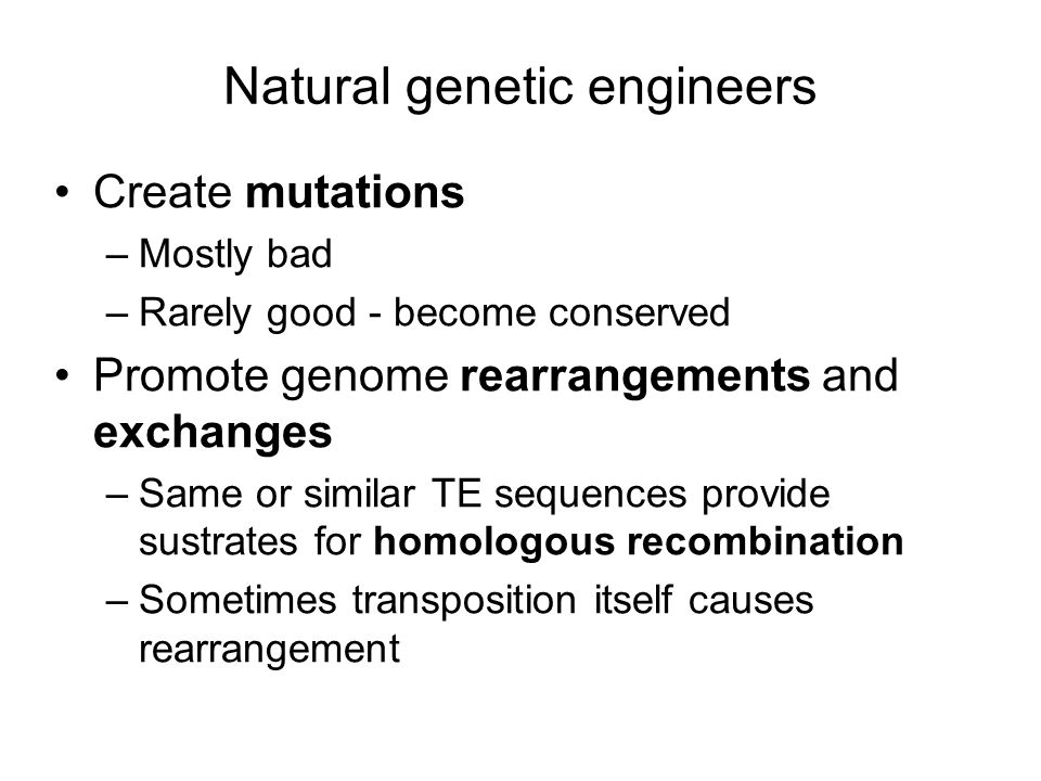 Natural genetic engineers Create mutations –Mostly bad –Rarely good - become conserved Promote genome rearrangements and exchanges –Same or similar TE sequences provide sustrates for homologous recombination –Sometimes transposition itself causes rearrangement