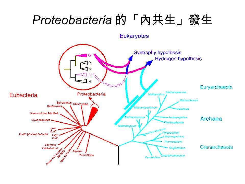 Proteobacteria 的「內共生」發生