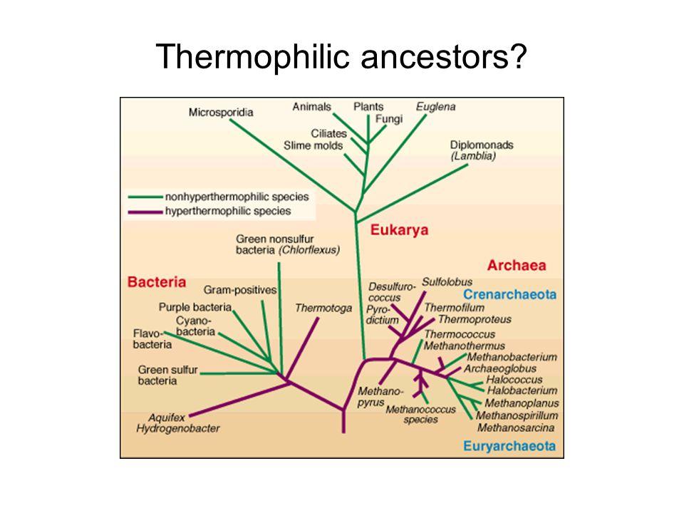 Thermophilic ancestors