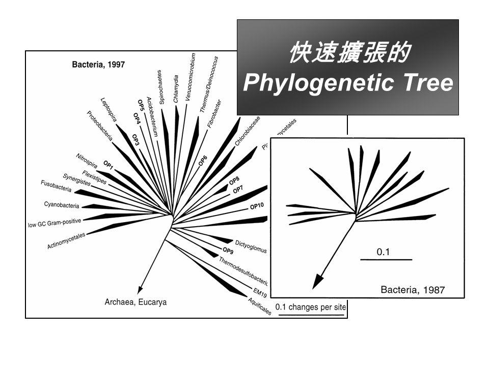 快速擴張的 Phylogenetic Tree