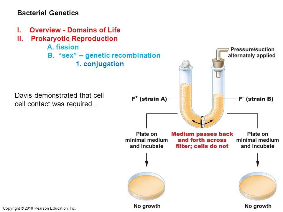 Copyright © 2010 Pearson Education, Inc. Bacterial Genetics I.Overview - Domains of Life II.