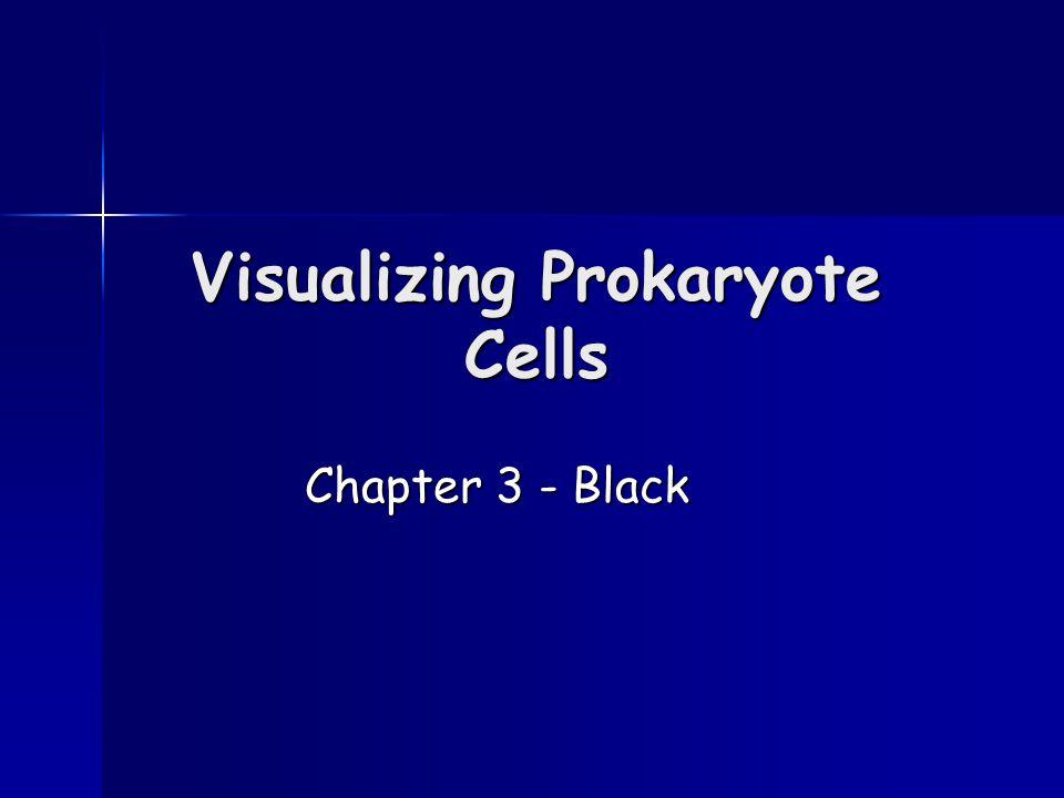 Visualizing Prokaryote Cells Chapter 3 - Black