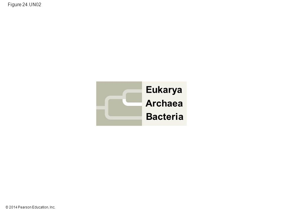 © 2014 Pearson Education, Inc. Figure 24.UN02 Eukarya Bacteria Archaea