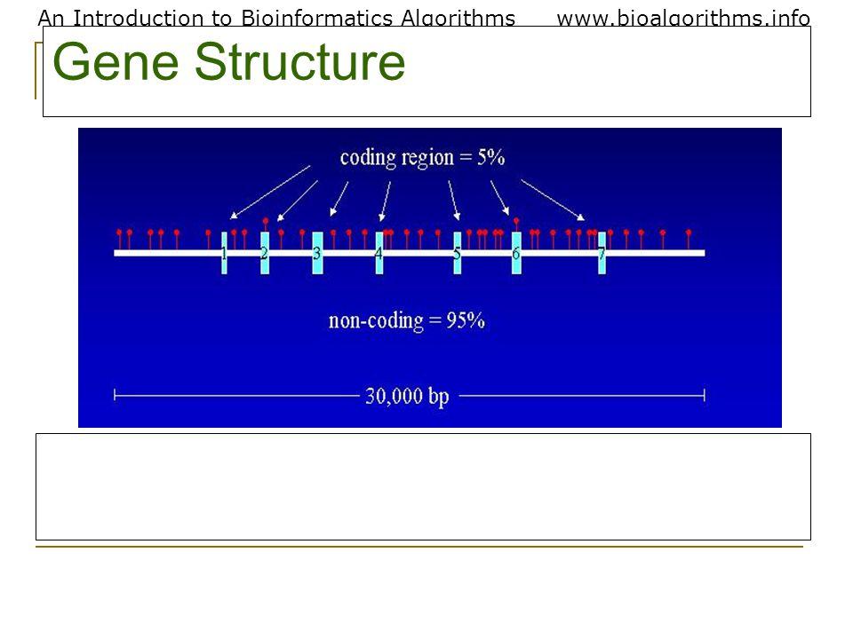 An Introduction to Bioinformatics Algorithmswww.bioalgorithms.info Gene Structure