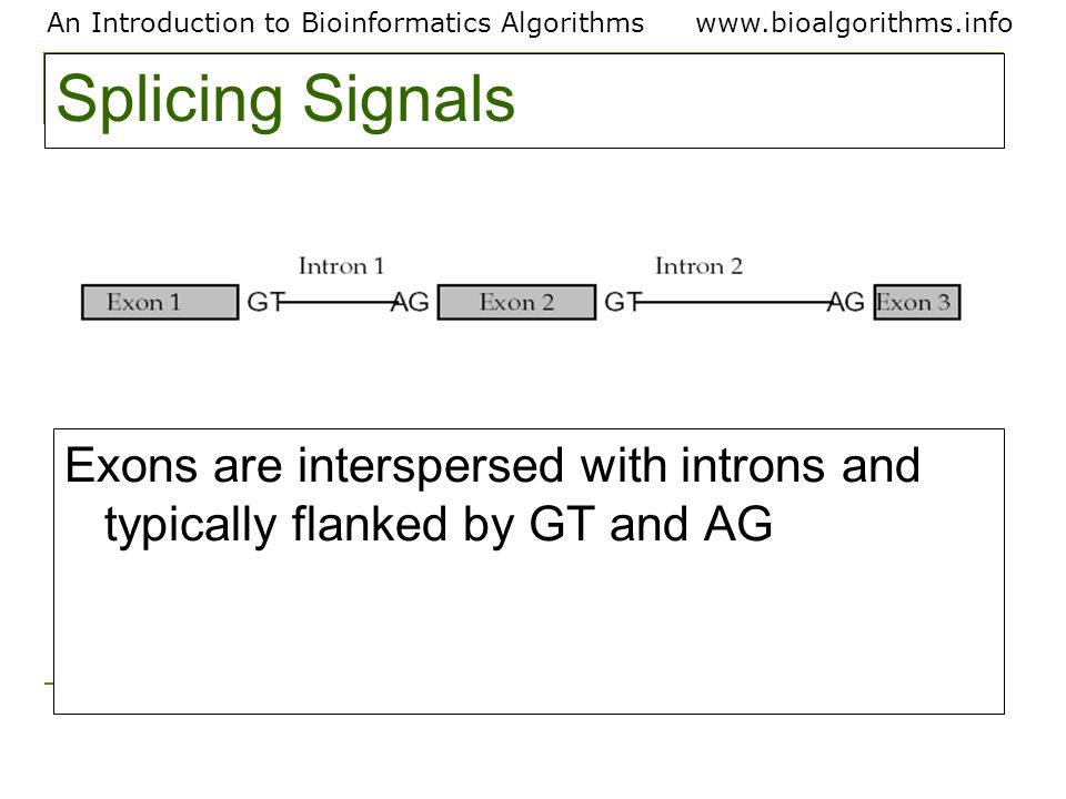 An Introduction to Bioinformatics Algorithmswww.bioalgorithms.info Splicing Signals Exons are interspersed with introns and typically flanked by GT and AG