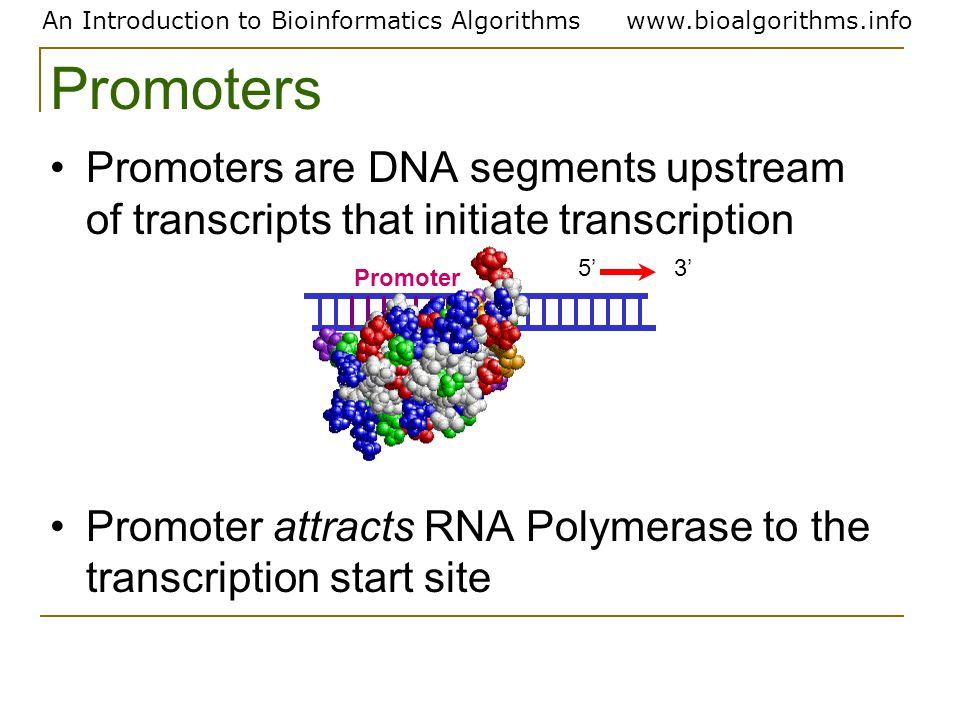 An Introduction to Bioinformatics Algorithmswww.bioalgorithms.info Promoters Promoters are DNA segments upstream of transcripts that initiate transcri