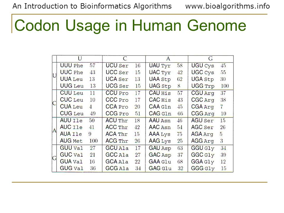 An Introduction to Bioinformatics Algorithmswww.bioalgorithms.info Codon Usage in Human Genome