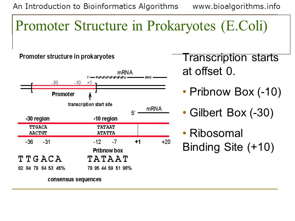 An Introduction to Bioinformatics Algorithmswww.bioalgorithms.info Promoter Structure in Prokaryotes (E.Coli) Transcription starts at offset 0. Pribno