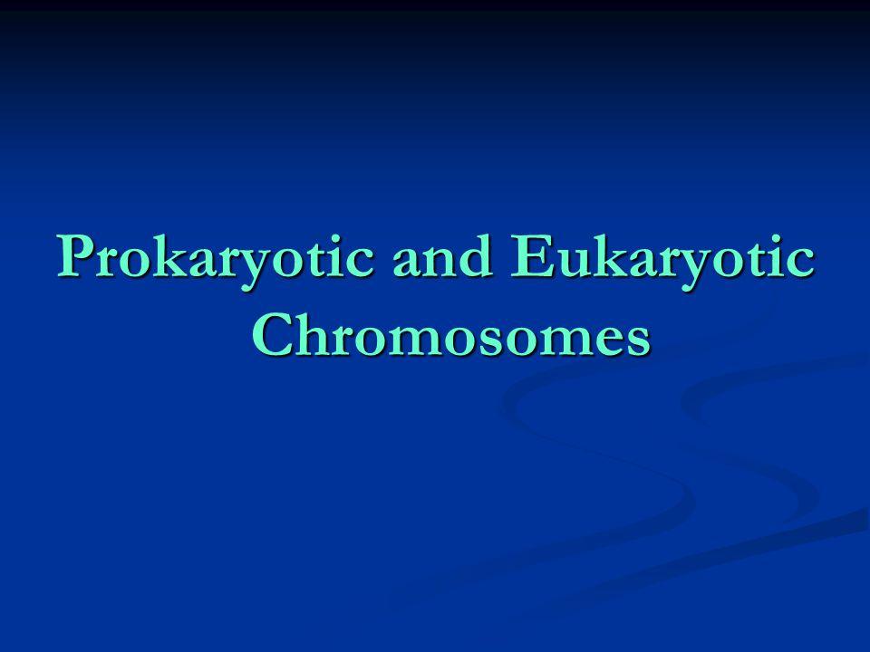 Prokaryotic and Eukaryotic Chromosomes