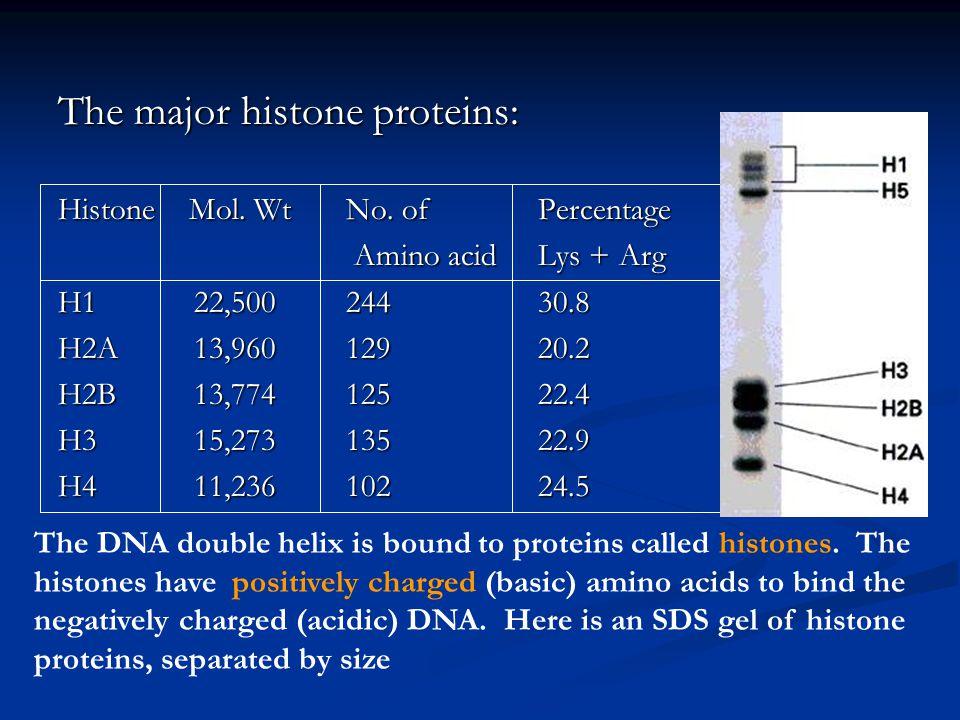 The major histone proteins: Histone Mol.WtNo.