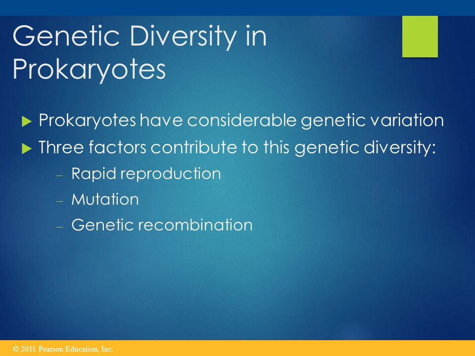 Genetic Diversity in Prokaryotes  Prokaryotes have considerable genetic variation  Three factors contribute to this genetic diversity: – Rapid reproduction – Mutation – Genetic recombination © 2011 Pearson Education, Inc.