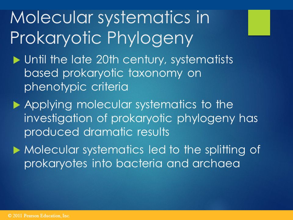 Molecular systematics in Prokaryotic Phylogeny  Until the late 20th century, systematists based prokaryotic taxonomy on phenotypic criteria  Applying molecular systematics to the investigation of prokaryotic phylogeny has produced dramatic results  Molecular systematics led to the splitting of prokaryotes into bacteria and archaea © 2011 Pearson Education, Inc.