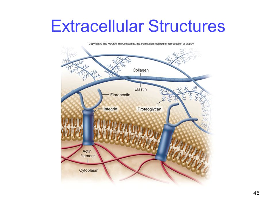 45 Extracellular Structures