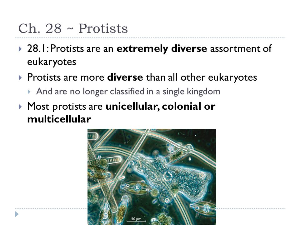 Ch. 28 ~ Protists  28.1: Protists are an extremely diverse assortment of eukaryotes  Protists are more diverse than all other eukaryotes  And are n