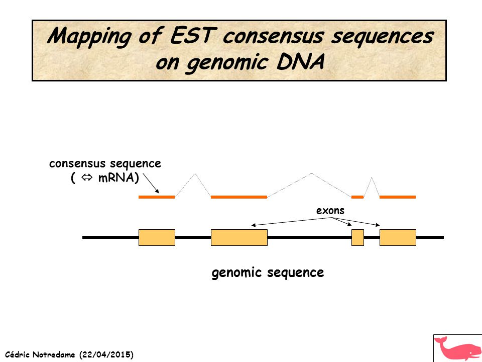 Cédric Notredame (22/04/2015) Mapping of EST consensus sequences on genomic DNA genomic sequence exons consensus sequence (  mRNA)
