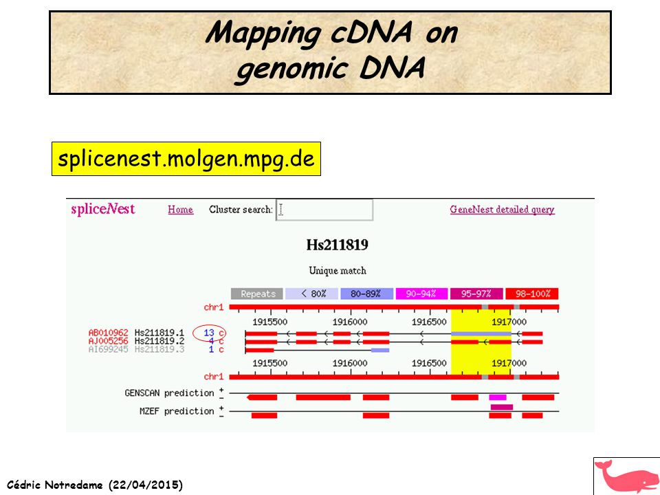 Mapping cDNA on genomic DNA splicenest.molgen.mpg.de