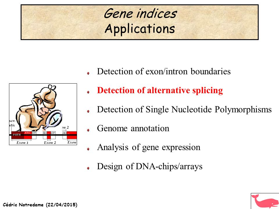 Cédric Notredame (22/04/2015) Gene indices Applications Detection of exon/intron boundaries Detection of alternative splicing Detection of Single Nucleotide Polymorphisms Genome annotation Analysis of gene expression Design of DNA-chips/arrays