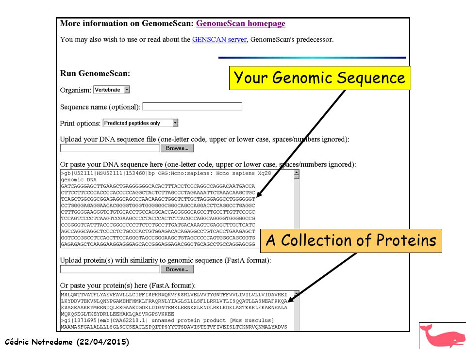 Cédric Notredame (22/04/2015) Your Genomic Sequence A Collection of Proteins