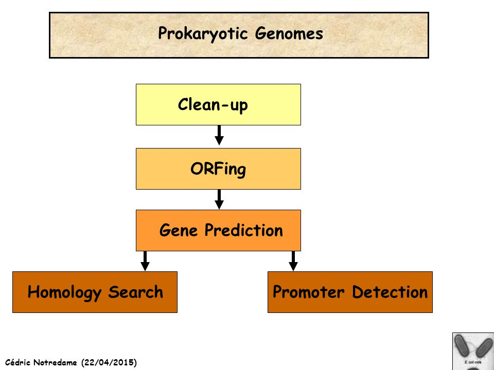 Cédric Notredame (22/04/2015) Prokaryotic Genomes Clean-upORFingHomology SearchGene PredictionPromoter Detection