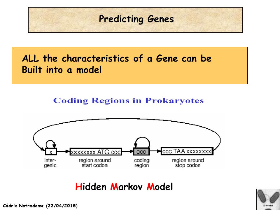 Cédric Notredame (22/04/2015) Predicting Genes ALL the characteristics of a Gene can be Built into a model Hidden Markov Model
