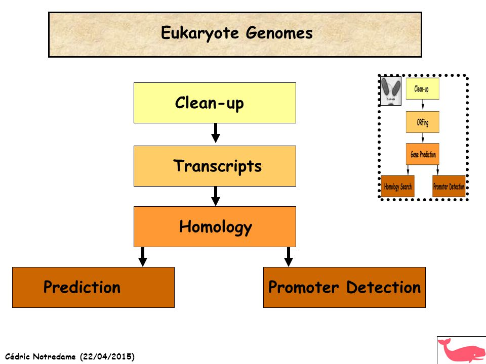 Cédric Notredame (22/04/2015) Eukaryote Genomes Clean-up Transcripts Prediction Homology Promoter Detection