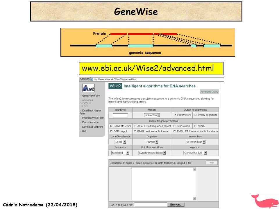Cédric Notredame (22/04/2015) www.ebi.ac.uk/Wise2/advanced.html GeneWise genomic sequence Protein