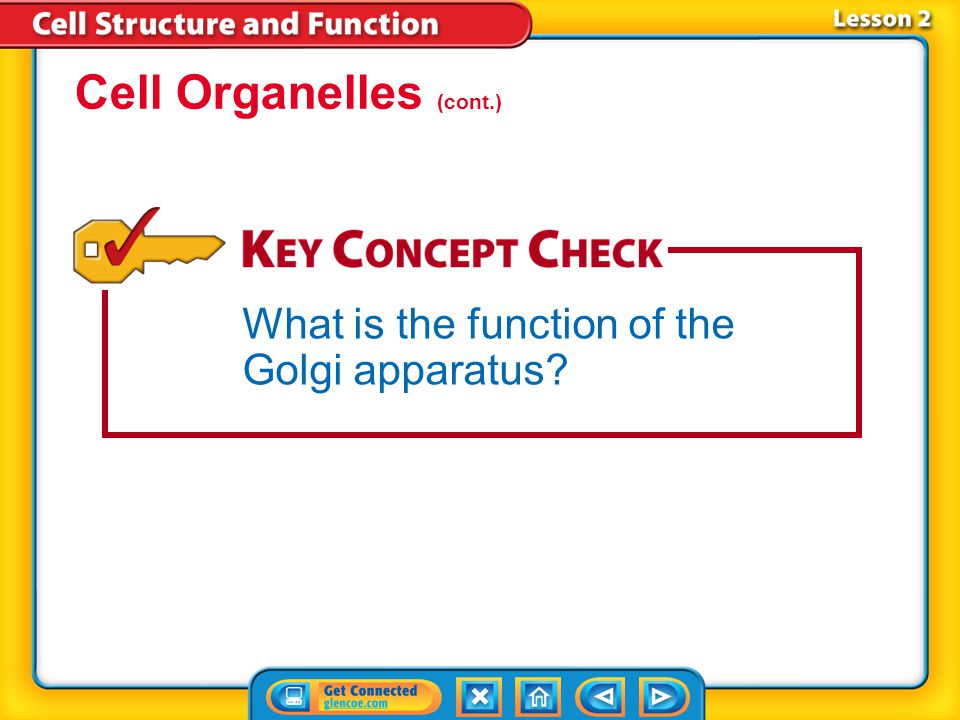 Lesson 2 Cell Organelles