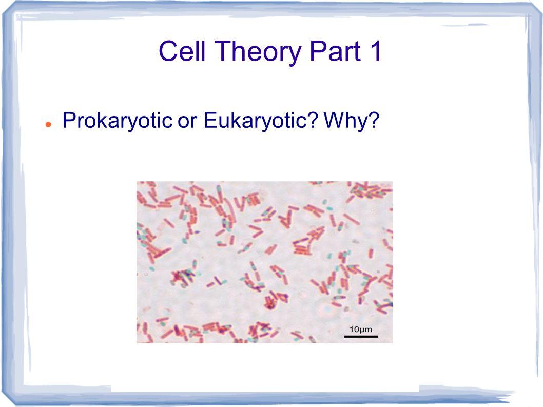 Cell Theory Part 1 Prokaryotic or Eukaryotic? Why?