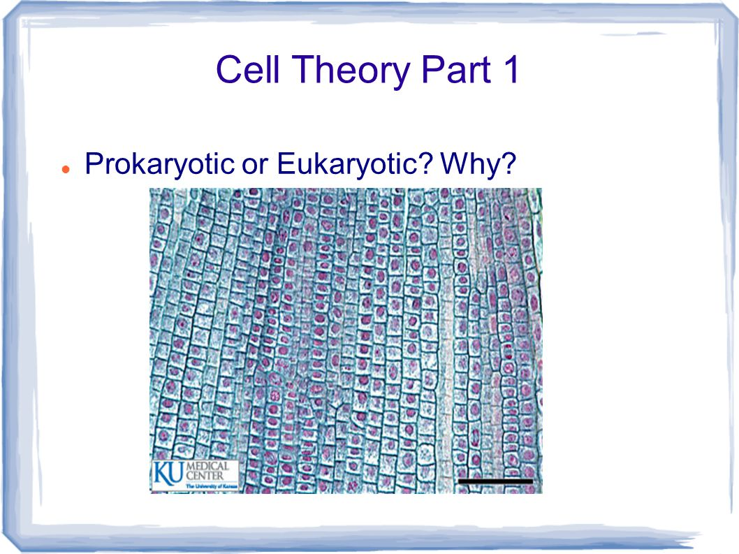 Cell Theory Part 1 Prokaryotic! Very simple cells...