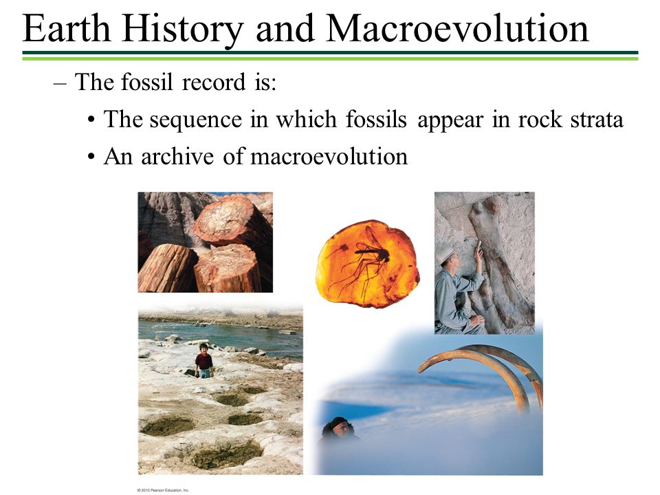 Earth History and Macroevolution –The fossil record is: The sequence in which fossils appear in rock strata An archive of macroevolution