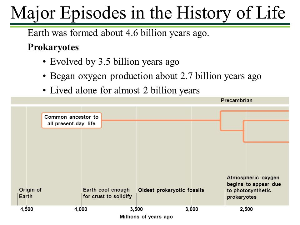 Major Episodes in the History of Life Earth was formed about 4.6 billion years ago. Prokaryotes Evolved by 3.5 billion years ago Began oxygen producti