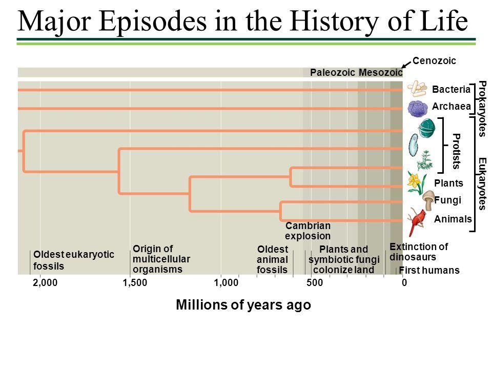 Major Episodes in the History of Life PaleozoicMesozoic Cenozoic Bacteria Archaea Plants Fungi Animals Prokaryotes Eukaryotes Protists Oldest eukaryot