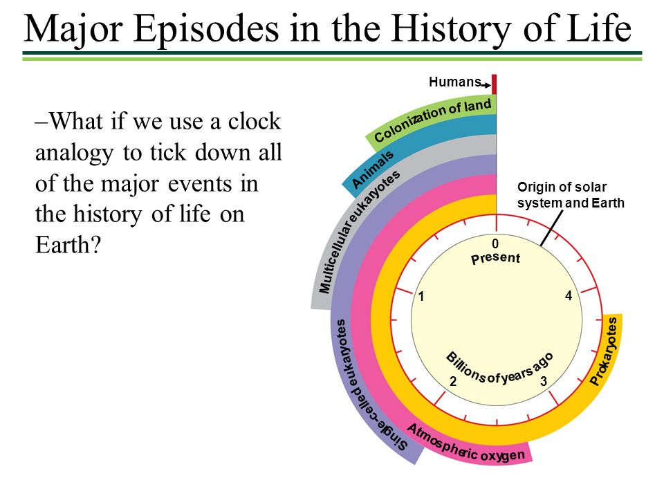 Major Episodes in the History of Life –What if we use a clock analogy to tick down all of the major events in the history of life on Earth? Humans Ori