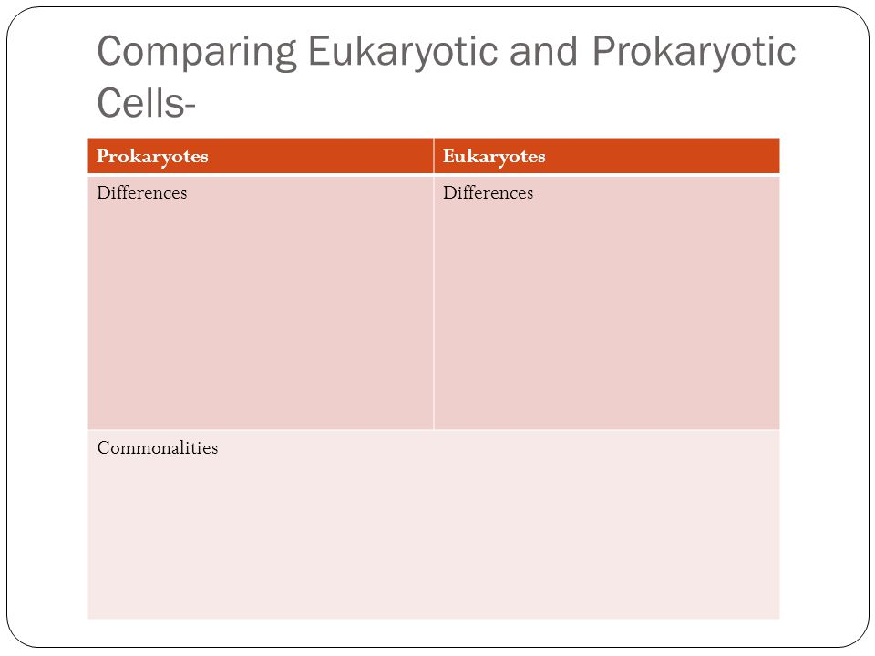 Comparing Eukaryotic and Prokaryotic Cells- ProkaryotesEukaryotes Differences Commonalities