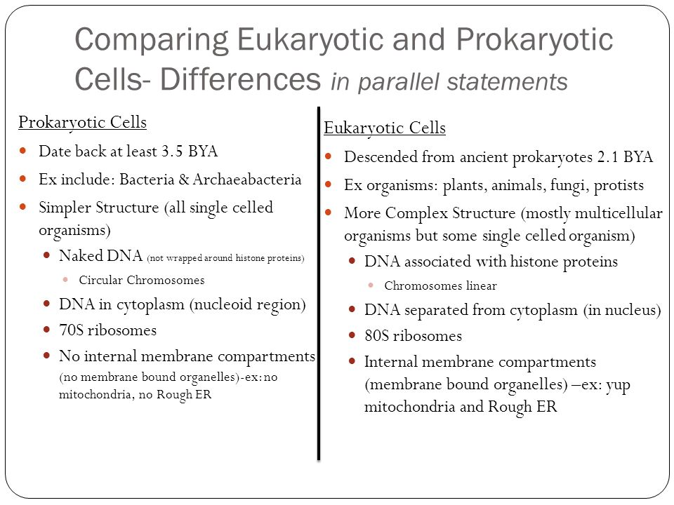 Comparing Eukaryotic and Prokaryotic Cells- Differences in parallel statements Prokaryotic Cells Date back at least 3.5 BYA Ex include: Bacteria & Arc