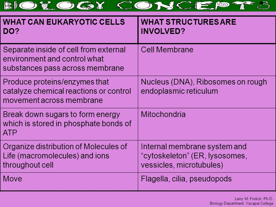 Larry M. Frolich, Ph.D. Biology Department, Yavapai College WHAT CAN EUKARYOTIC CELLS DO? WHAT STRUCTURES ARE INVOLVED? Separate inside of cell from e