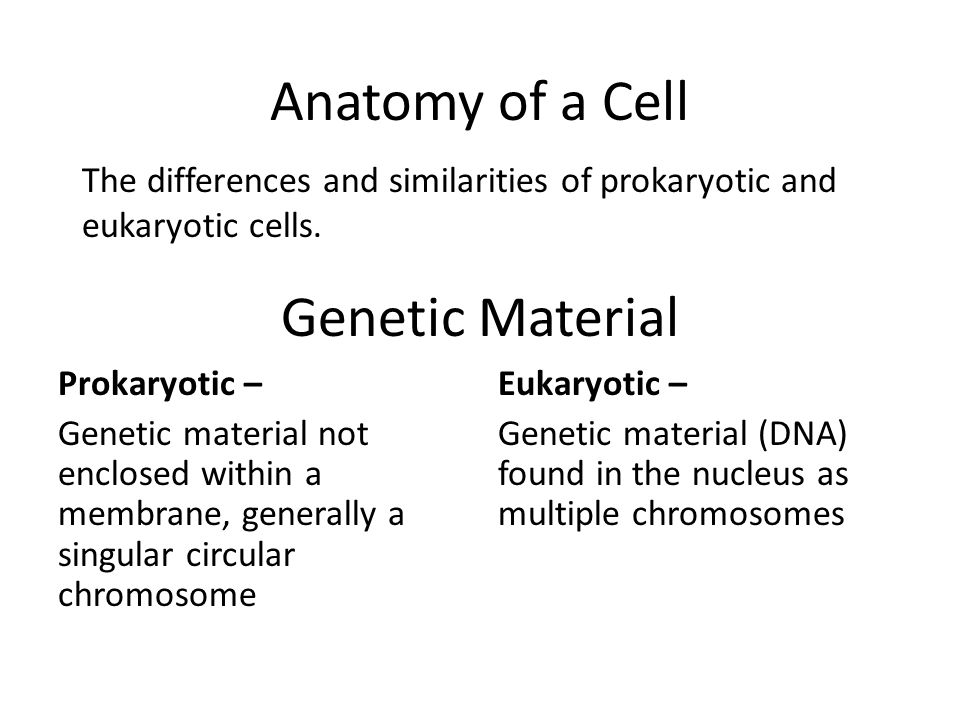 Genetic Material Prokaryotic – Genetic material not enclosed within a membrane, generally a singular circular chromosome Eukaryotic – Genetic material (DNA) found in the nucleus as multiple chromosomes Anatomy of a Cell The differences and similarities of prokaryotic and eukaryotic cells.