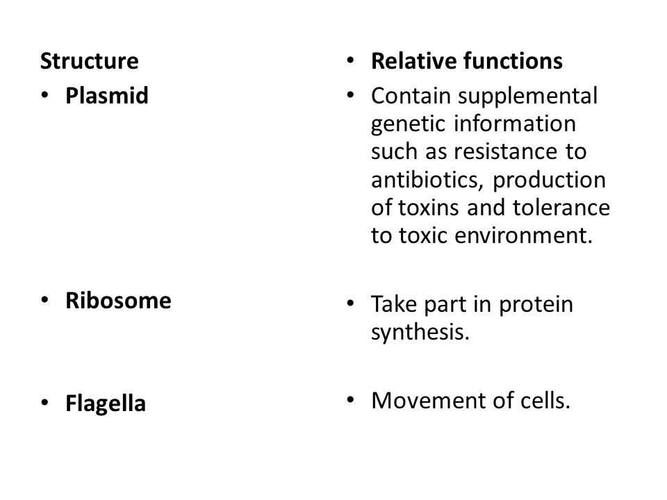 Structure Plasmid Ribosome Flagella Relative functions Contain supplemental genetic information such as resistance to antibiotics, production of toxins and tolerance to toxic environment.