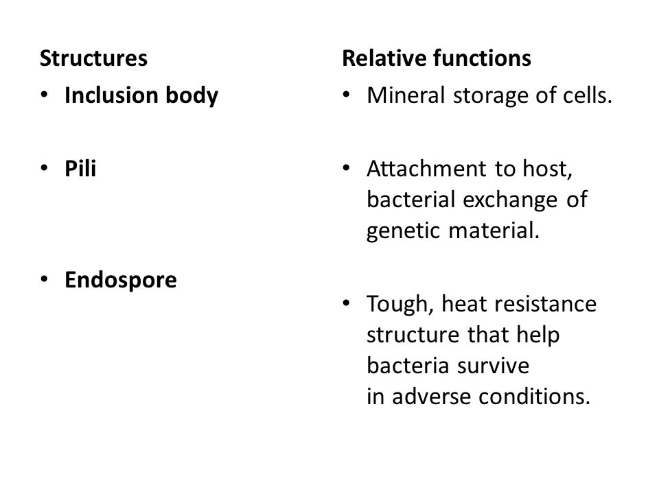 Structures Inclusion body Pili Endospore Relative functions Mineral storage of cells.