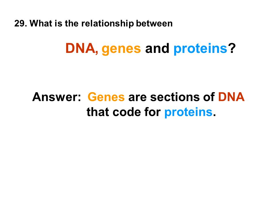 29. What is the relationship between DNA, genes and proteins.