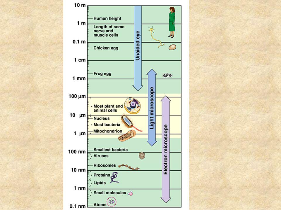 Characteristics of Cells