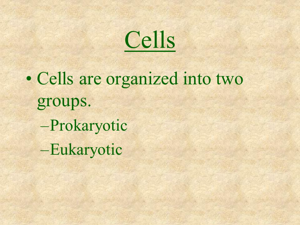 Cells Cells are organized into two groups. –Prokaryotic –Eukaryotic