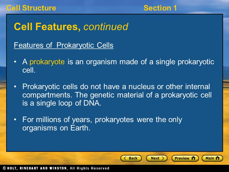 Cell StructureSection 1 Cell Features, continued Features of Prokaryotic Cells A prokaryote is an organism made of a single prokaryotic cell.