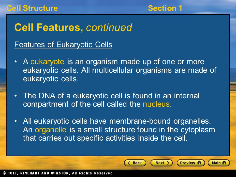 Cell StructureSection 1 Cell Features, continued Features of Eukaryotic Cells A eukaryote is an organism made up of one or more eukaryotic cells.