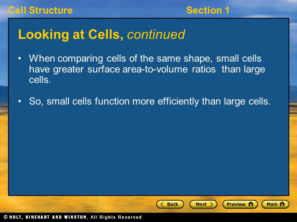 Cell StructureSection 1 Looking at Cells, continued When comparing cells of the same shape, small cells have greater surface area-to-volume ratios than large cells.